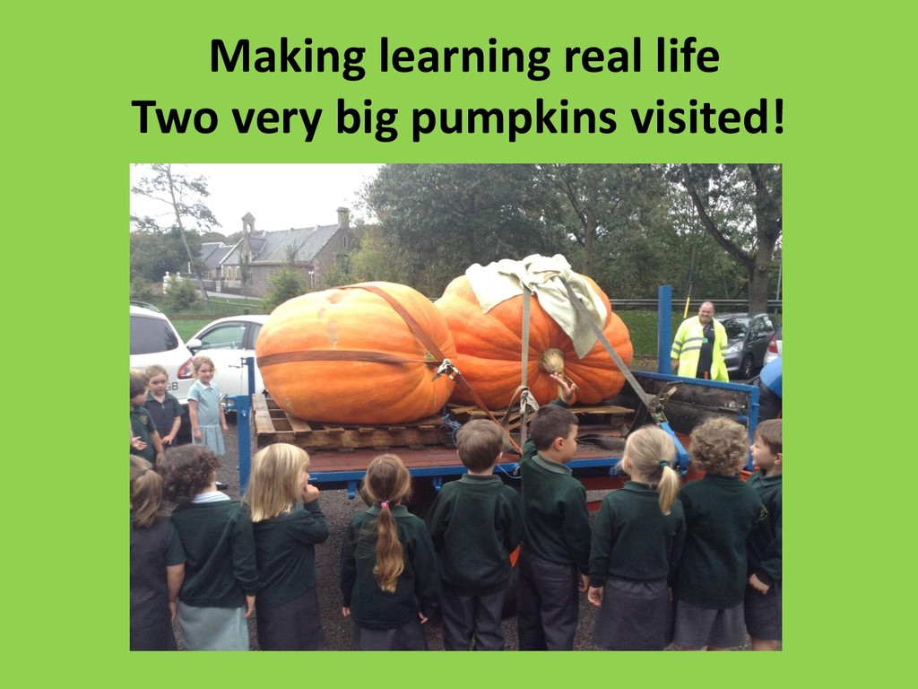 Making learning real life Two very big pumpkins...