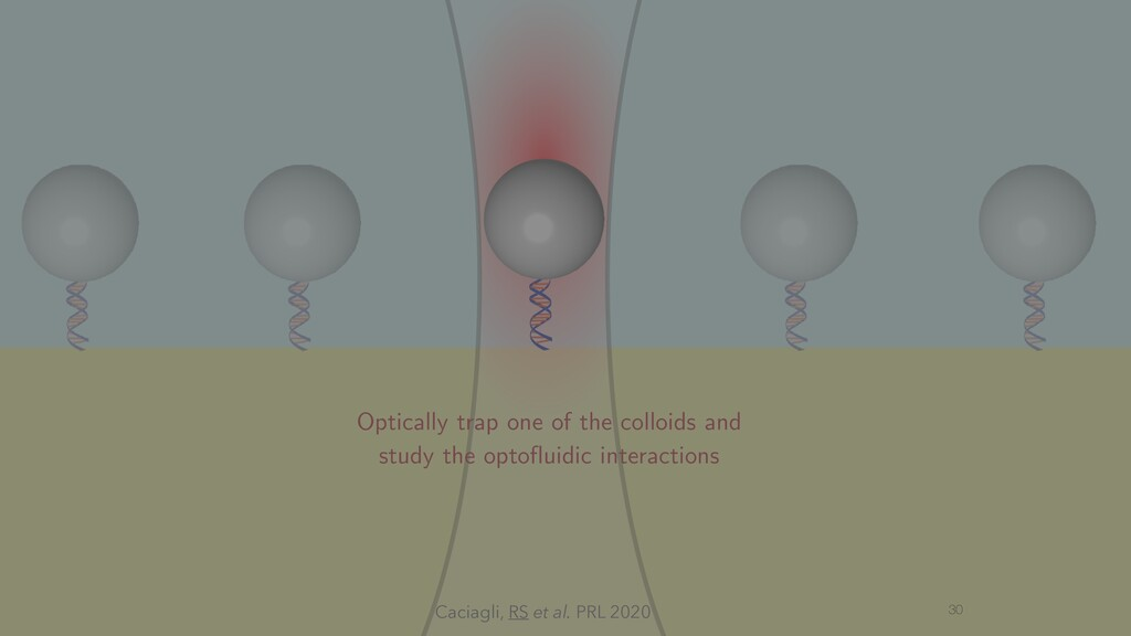 30 Optically trap one of the colloids and study...