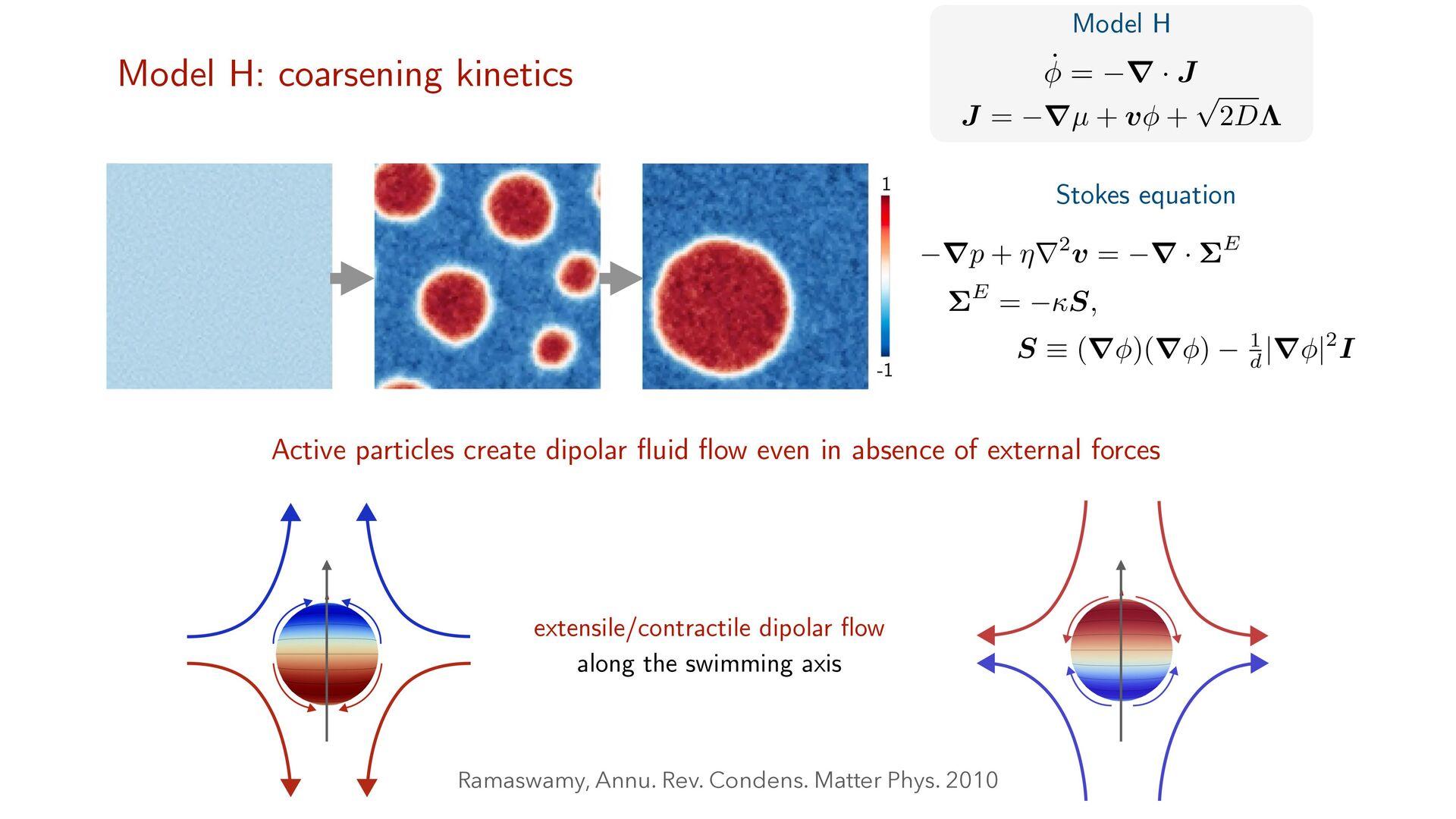 φ4 fi eld theory of passive phase separation ˙ ...