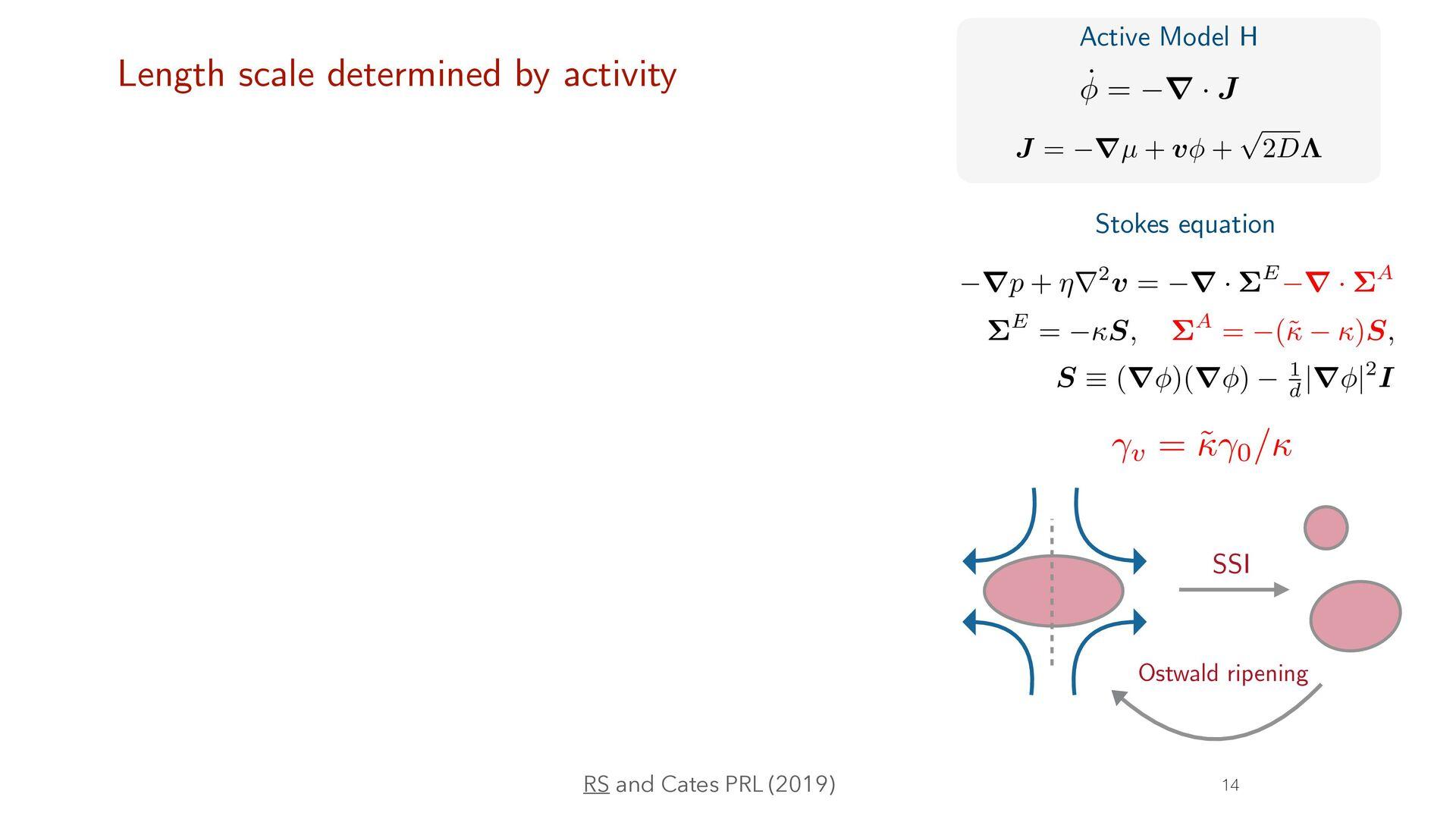 φ4 fi eld theory of active phase separation RS ...