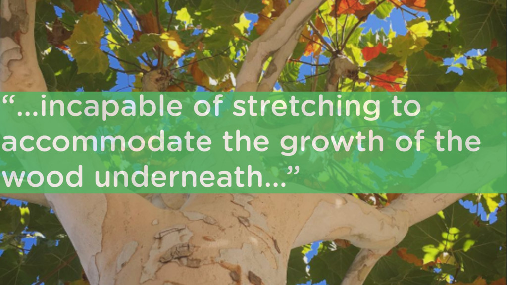 """""""…incapable of stretching to accommodate the gr..."""