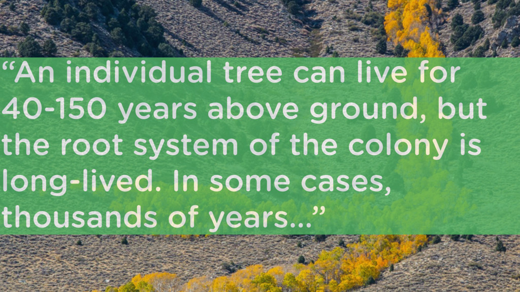 """""""An individual tree can live for 40-150 years a..."""