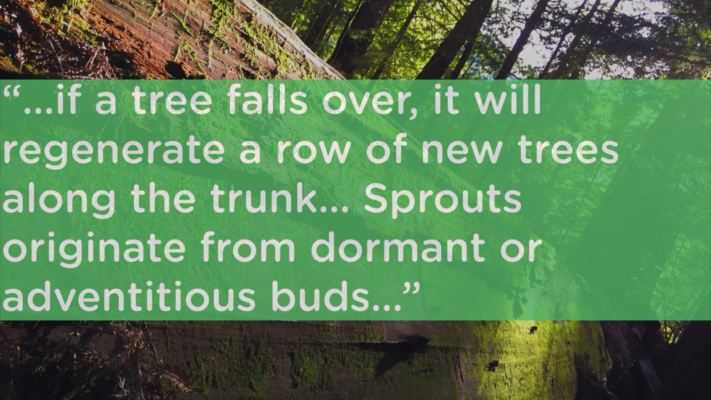 """""""…if a tree falls over, it will regenerate a ro..."""