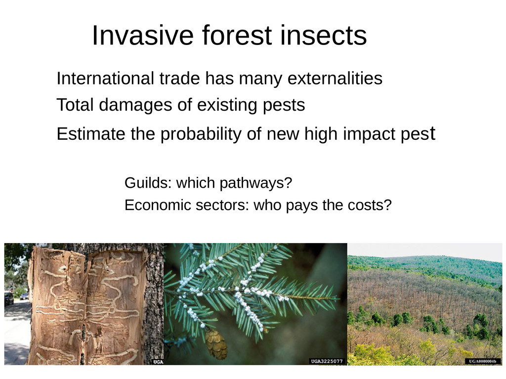 Invasive forest insects 1. International trade ...