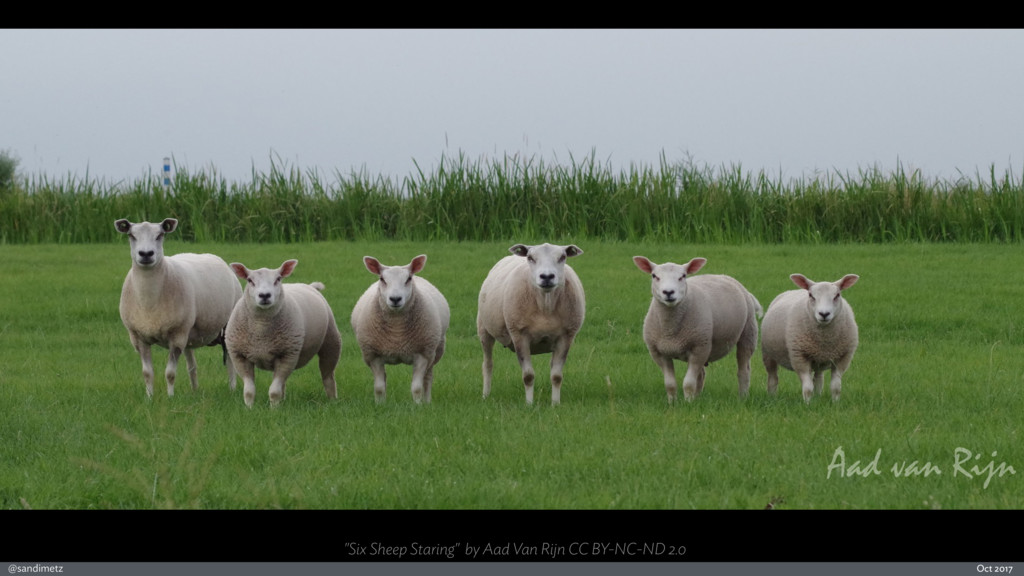 "@sandimetz Oct 2017 ""Six Sheep Staring"" by Aad ..."