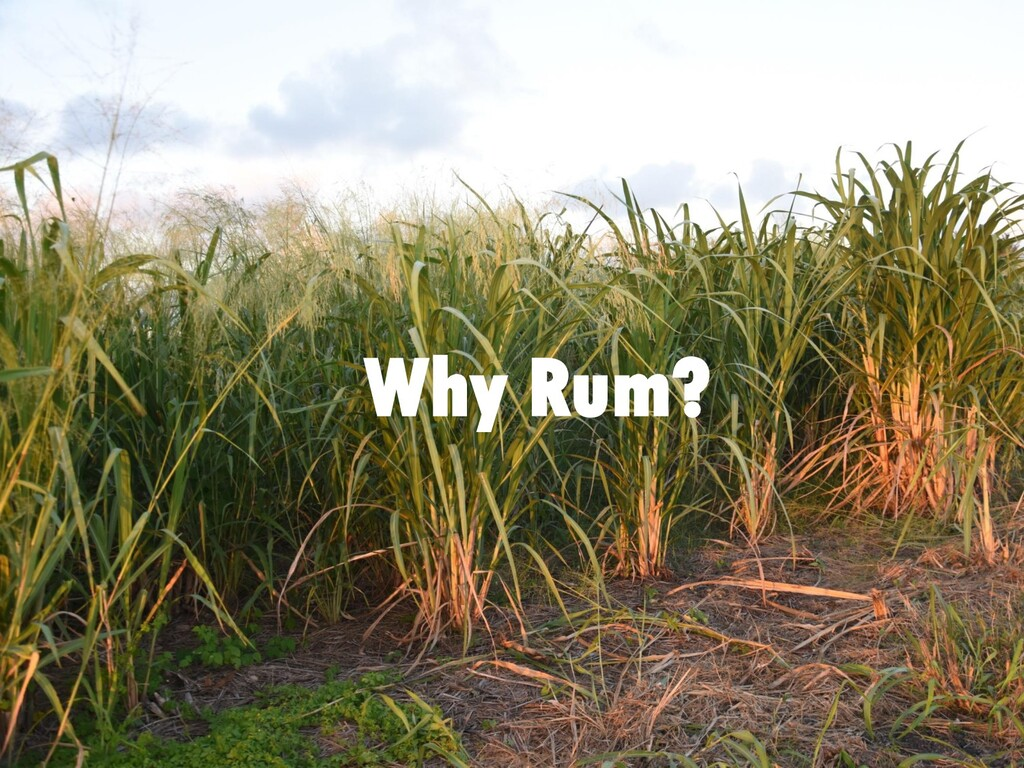 Why Rum?