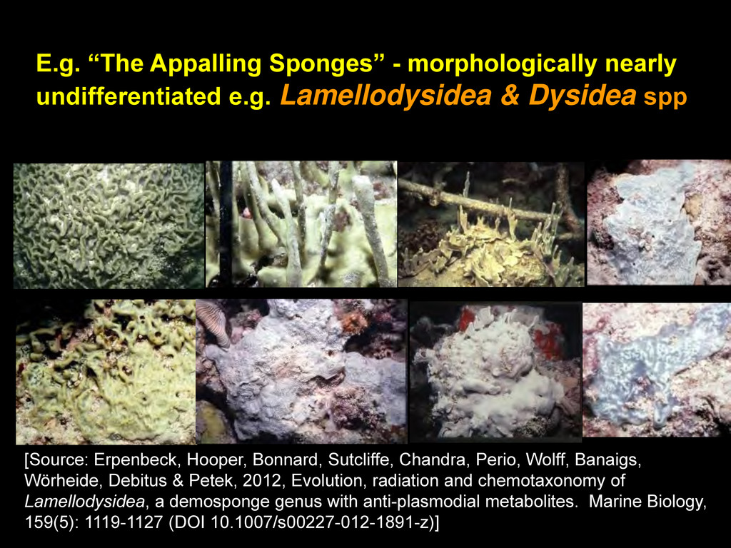"E.g. ""The Appalling Sponges"" - morphologically ..."