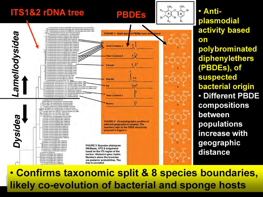 • Anti- plasmodial activity based on polybromin...