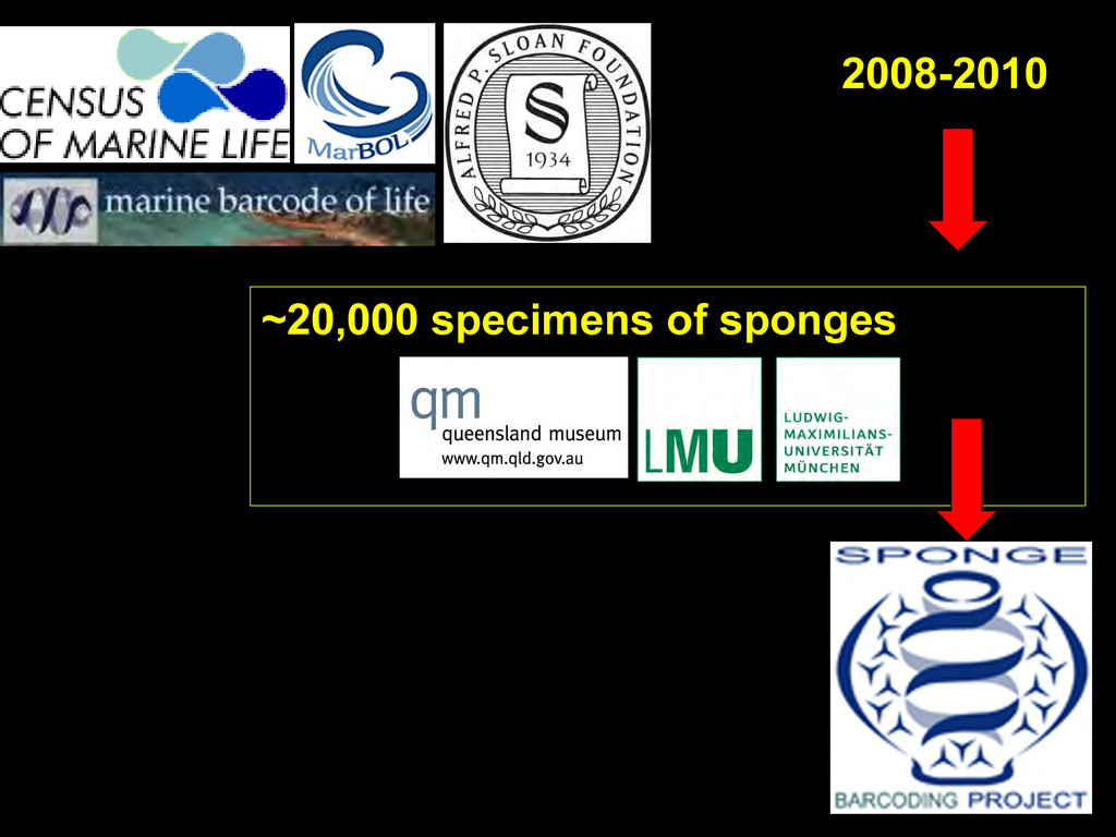 ~20,000 specimens of sponges 2008-2010