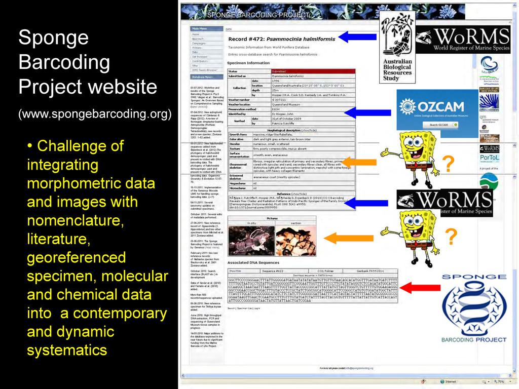 Sponge Barcoding Project website (www.spongebar...