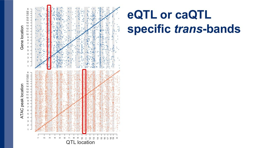 QTL location eQTL or caQTL specific trans-bands