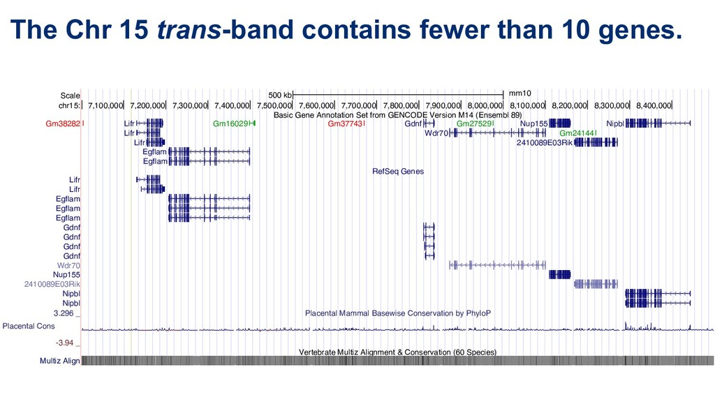 The Chr 15 trans-band contains fewer than 10 ge...