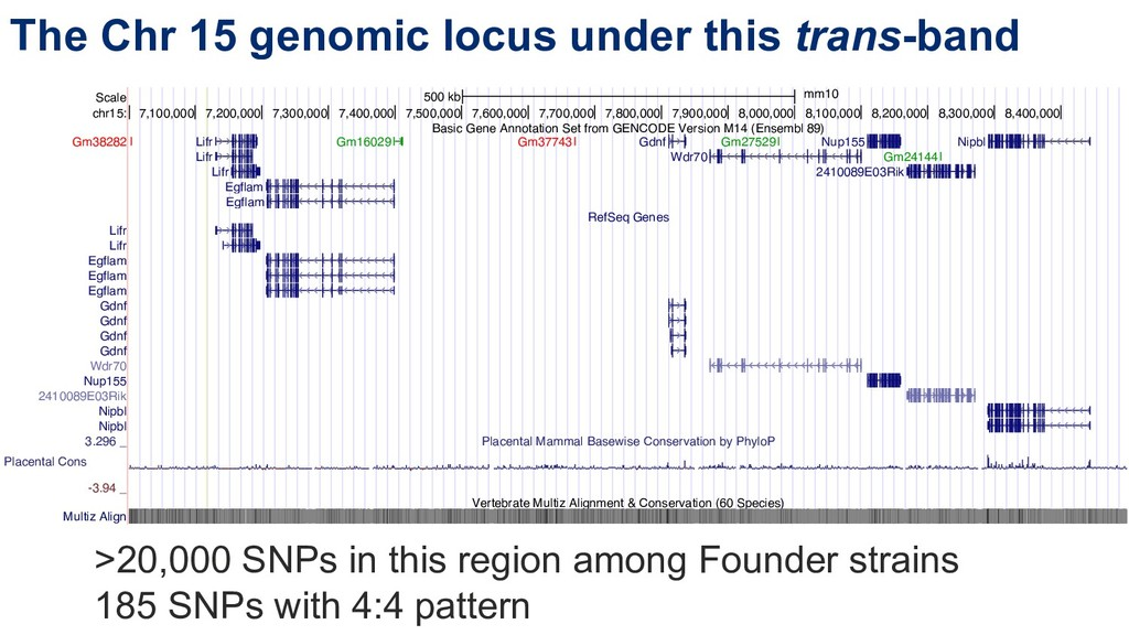 The Chr 15 genomic locus under this trans-band ...