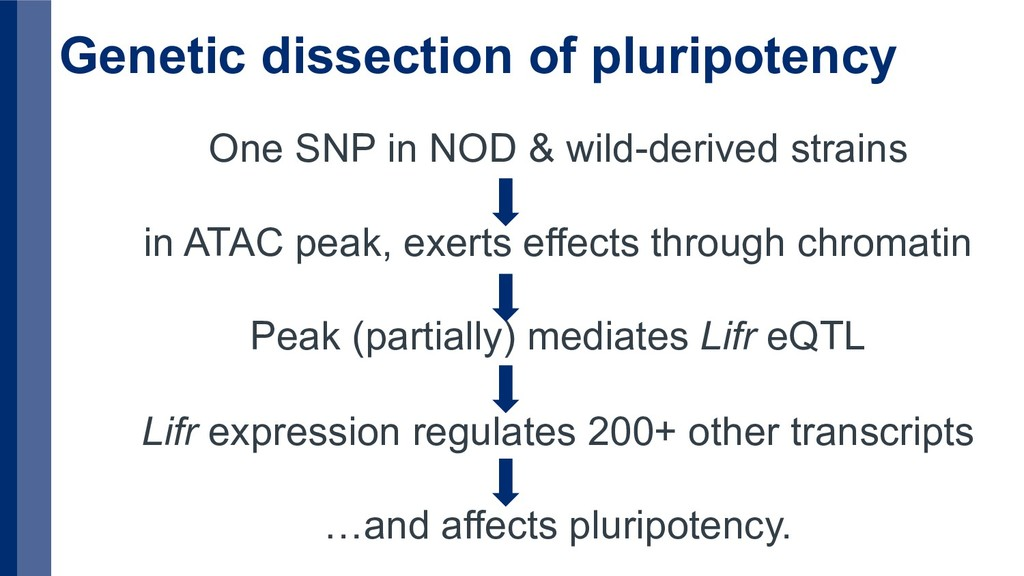 Genetic dissection of pluripotency One SNP in N...