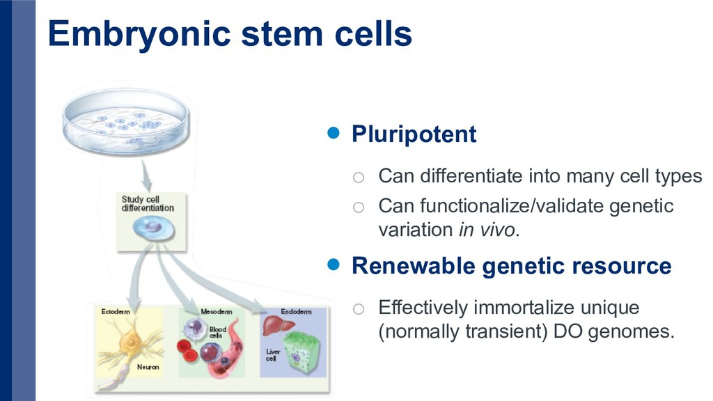 Embryonic stem cells Pluripotent o Can differen...