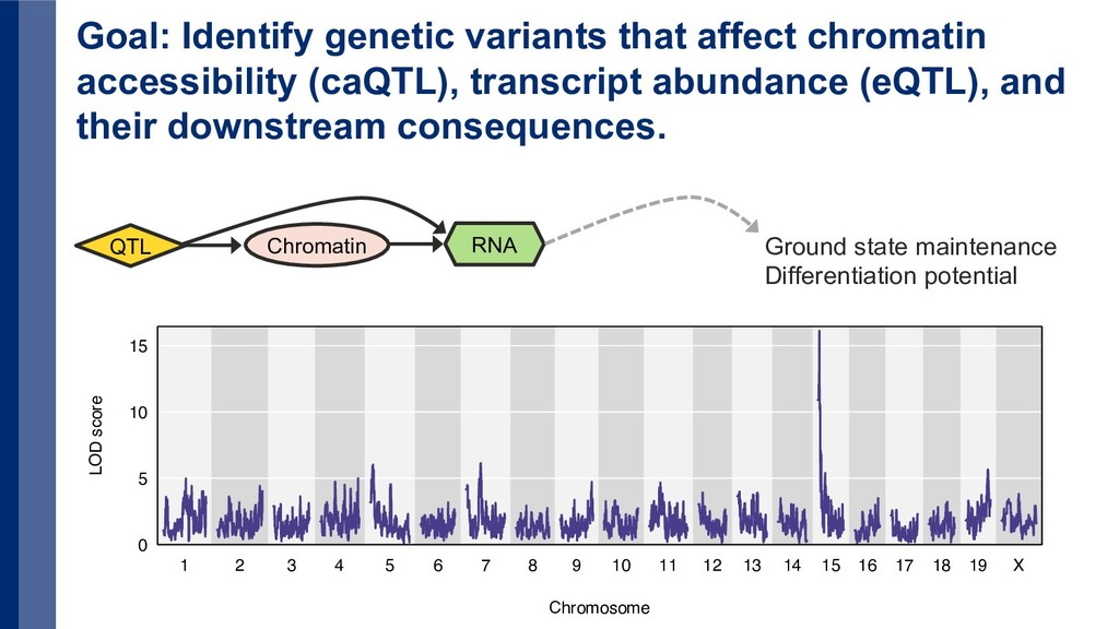 Goal: Identify genetic variants that affect chr...