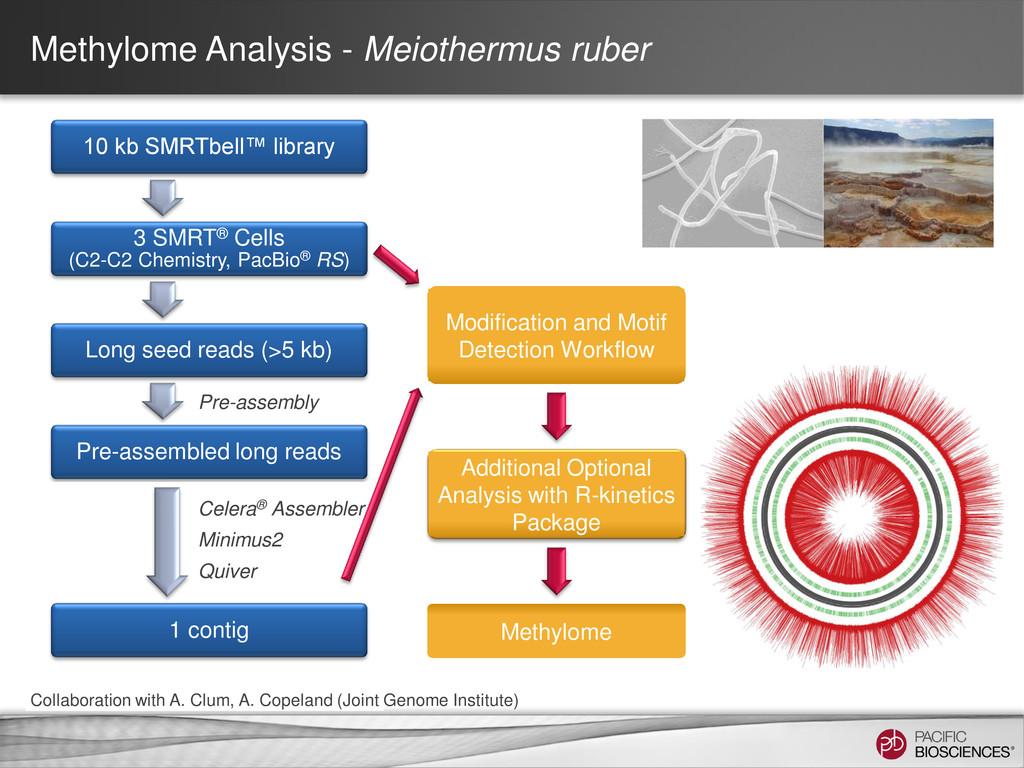 Methylome Analysis - Meiothermus ruber 10 kb SM...