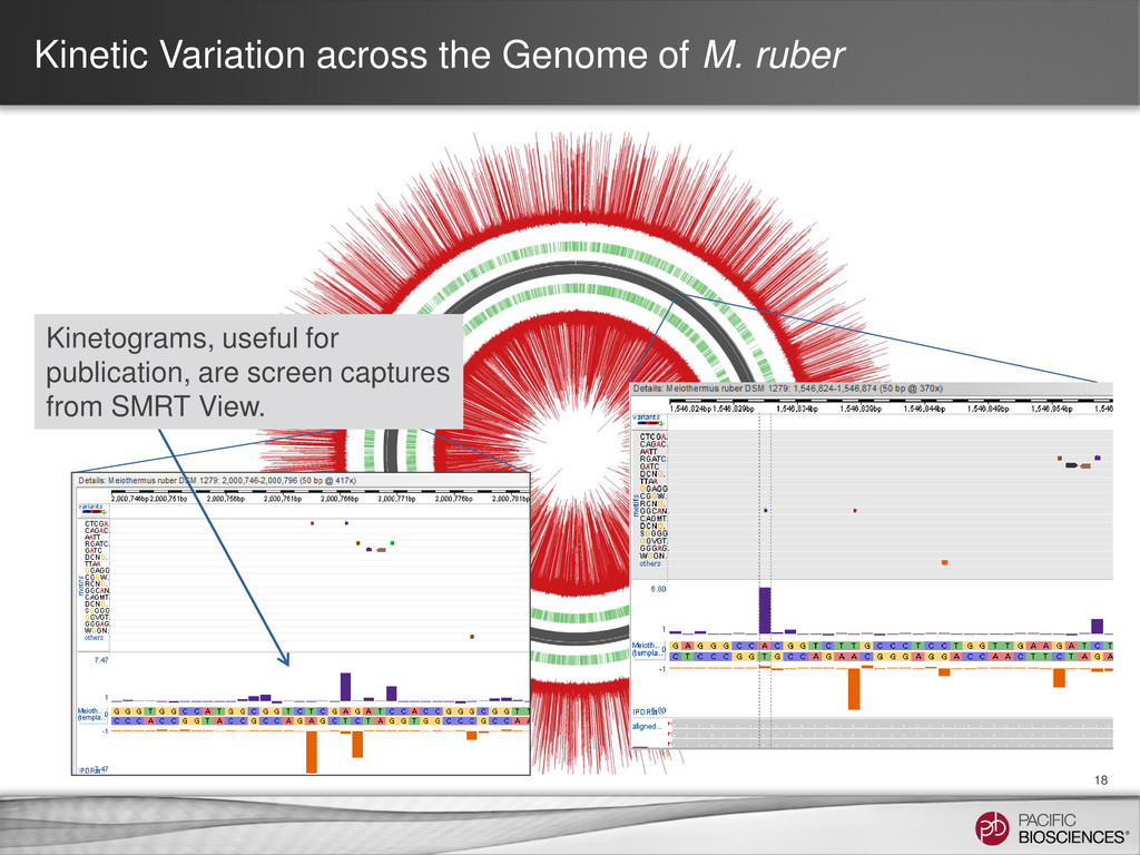 Kinetic Variation across the Genome of M. ruber...