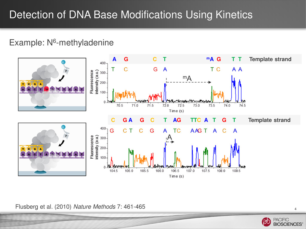 Detection of DNA Base Modifications Using Kinet...