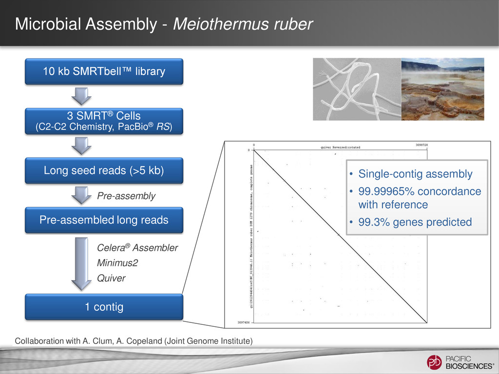 Microbial Assembly - Meiothermus ruber 10 kb SM...