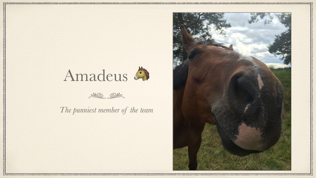 Amadeus  The punniest member of the team