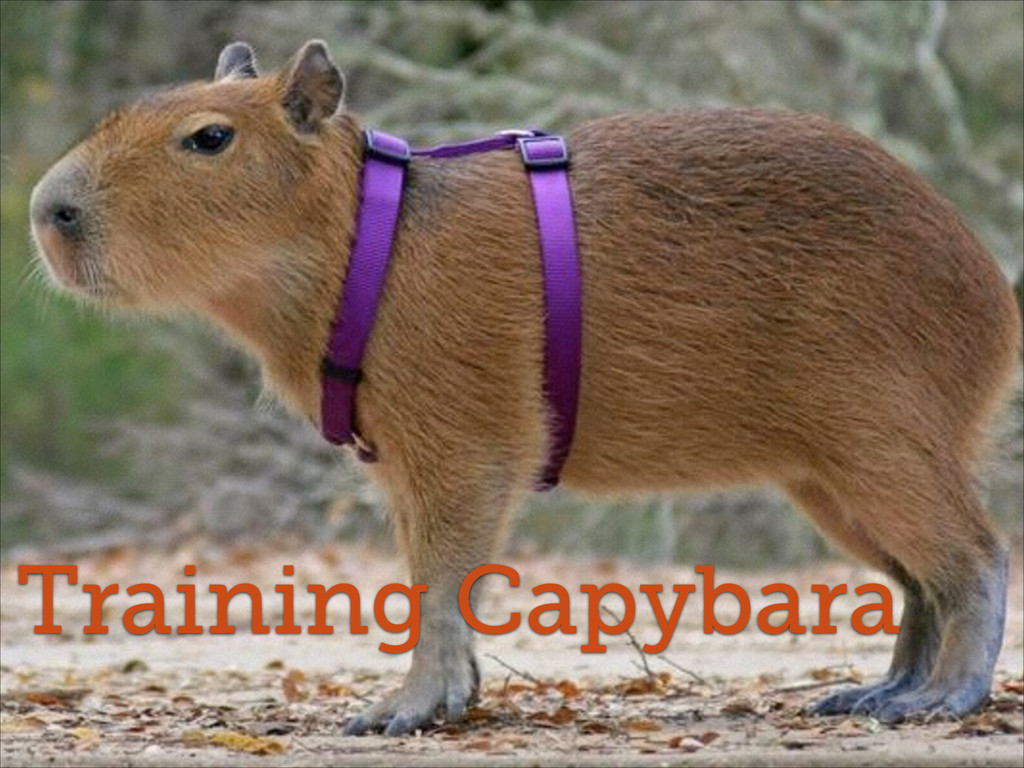 Training Capybara