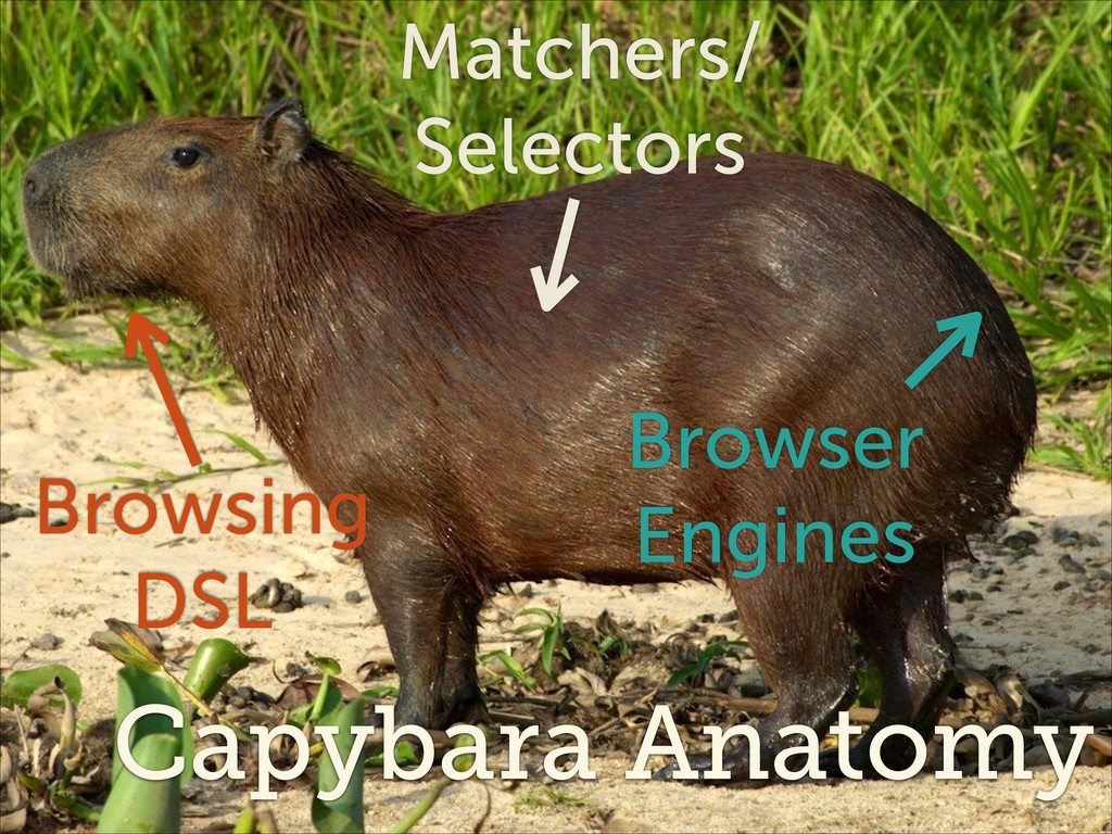 Capybara Anatomy Browsing DSL Matchers/ Selec...