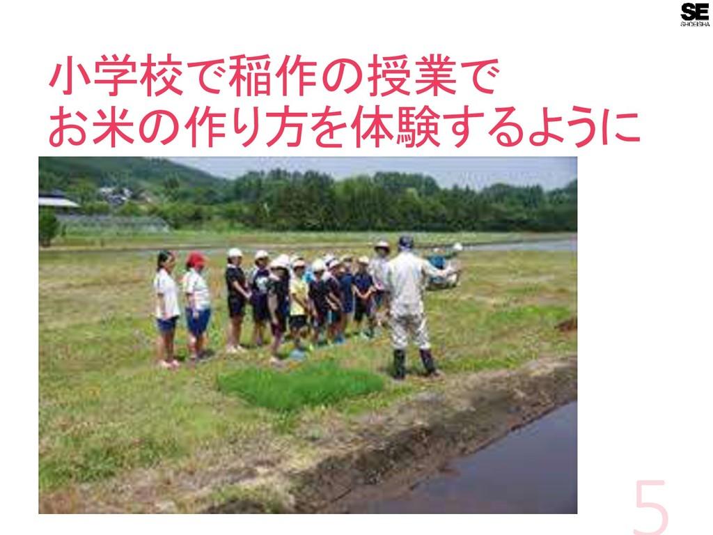 小学校で稲作の授業で お米の作り方を体験するように