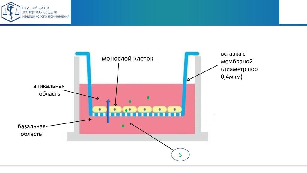 вставка с мембраной (диаметр пор 0,4мкм) апикал...