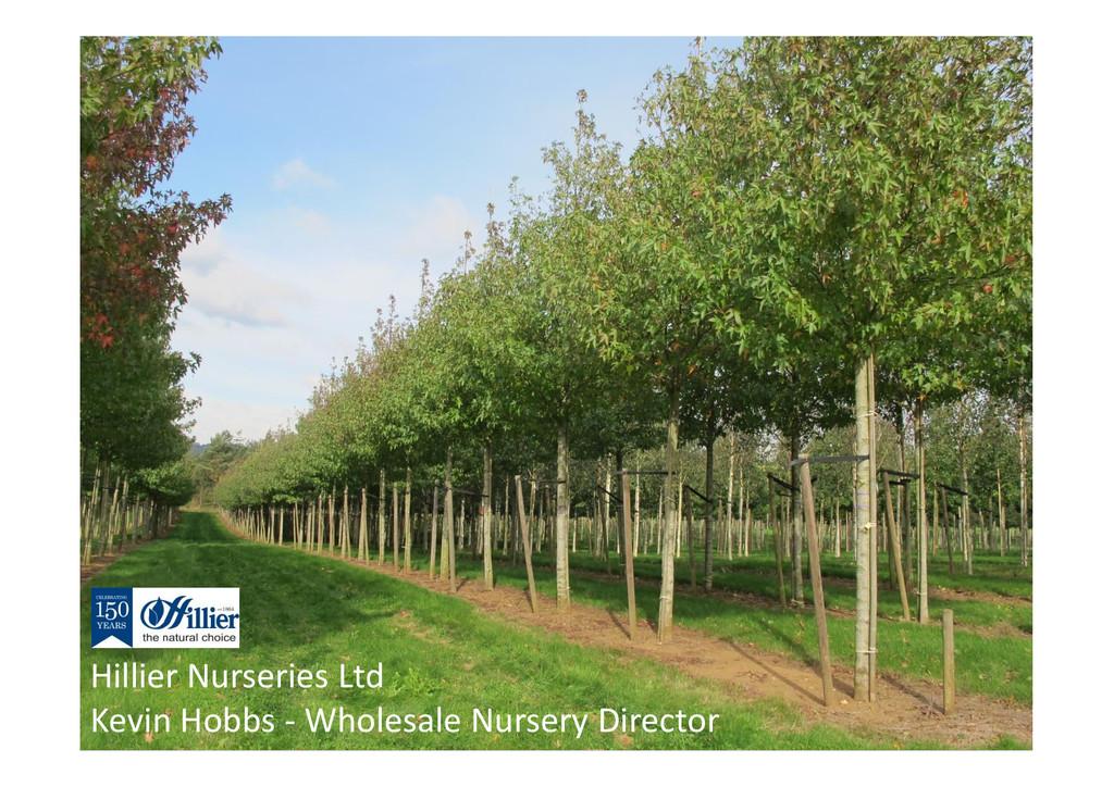 Hillier Nurseries Ltd Kevin Hobbs - Wholesale N...