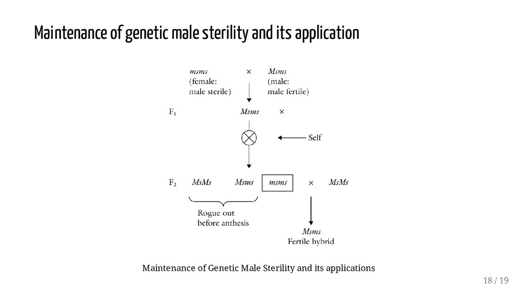 Maintenance of genetic male sterility and its a...