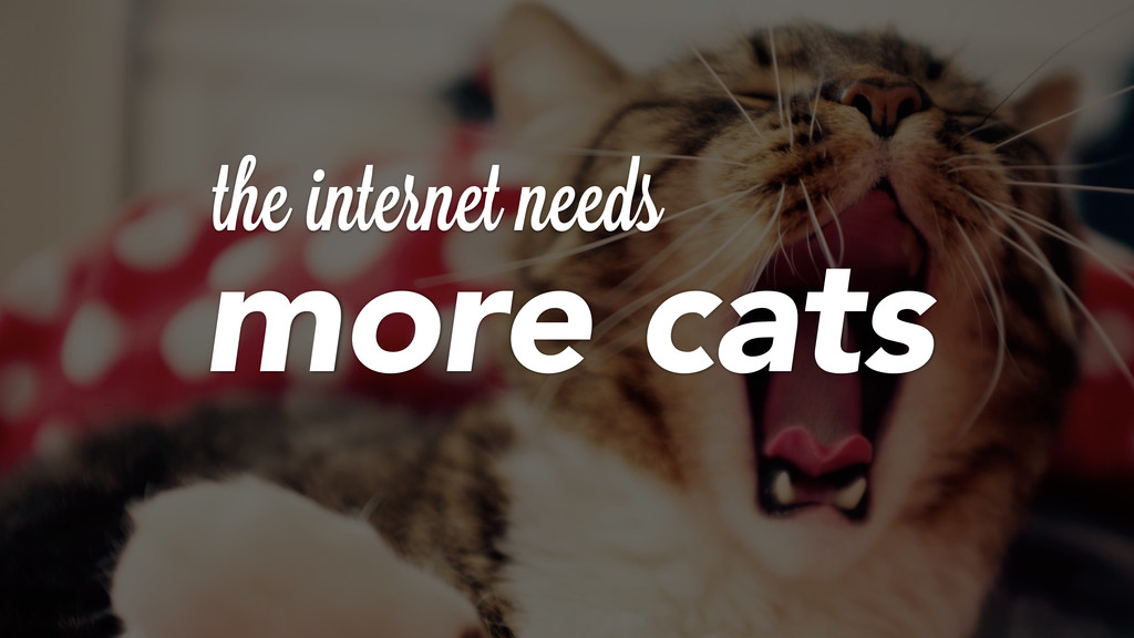 theiinternet needs more cats