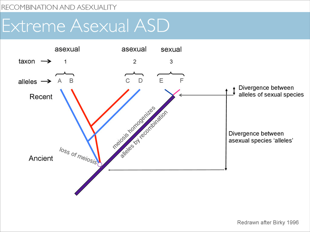 RECOMBINATION AND ASEXUALITY loss of meiosis A ...