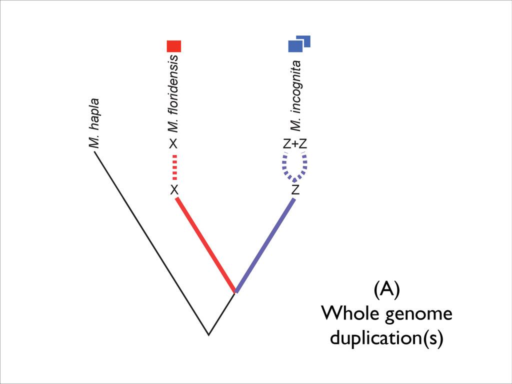 M. hapla X M. floridensis X B Scenario M. hapla...
