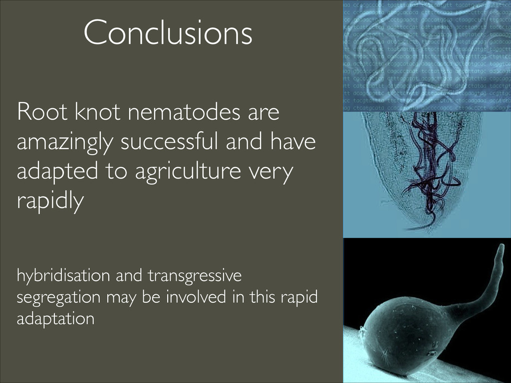 Conclusions Root knot nematodes are amazingly s...
