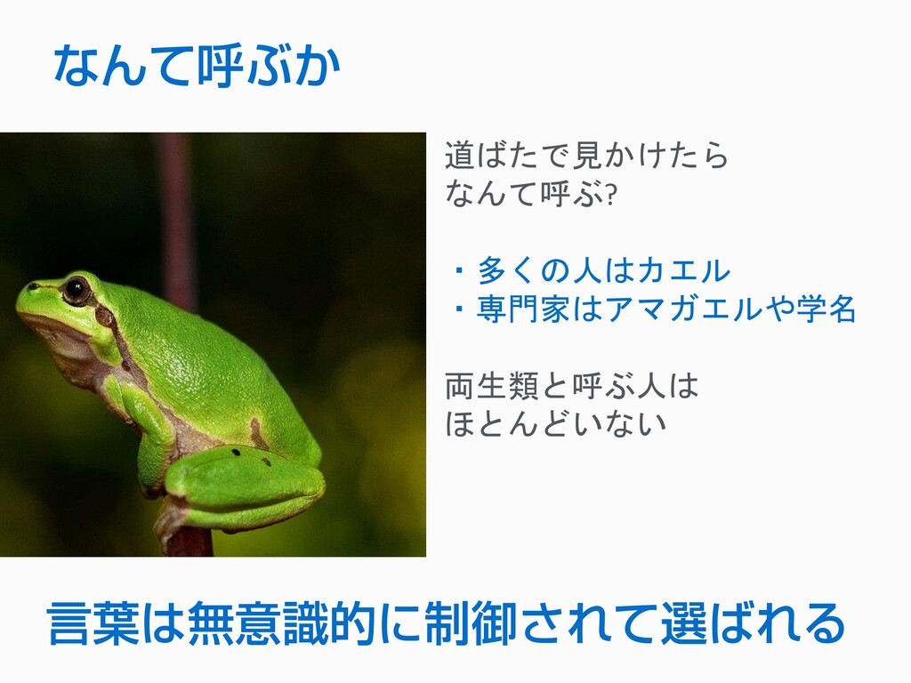 道ばたで見かけたら なんて呼ぶ? ・多くの人はカエル ・専門家はアマガエルや学名 両生類と呼ぶ...