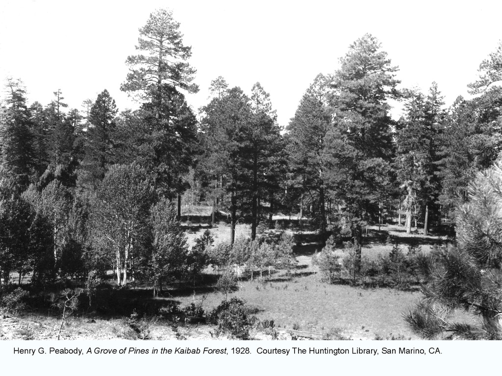 Henry G. Peabody, A Grove of Pines in the Kaiba...