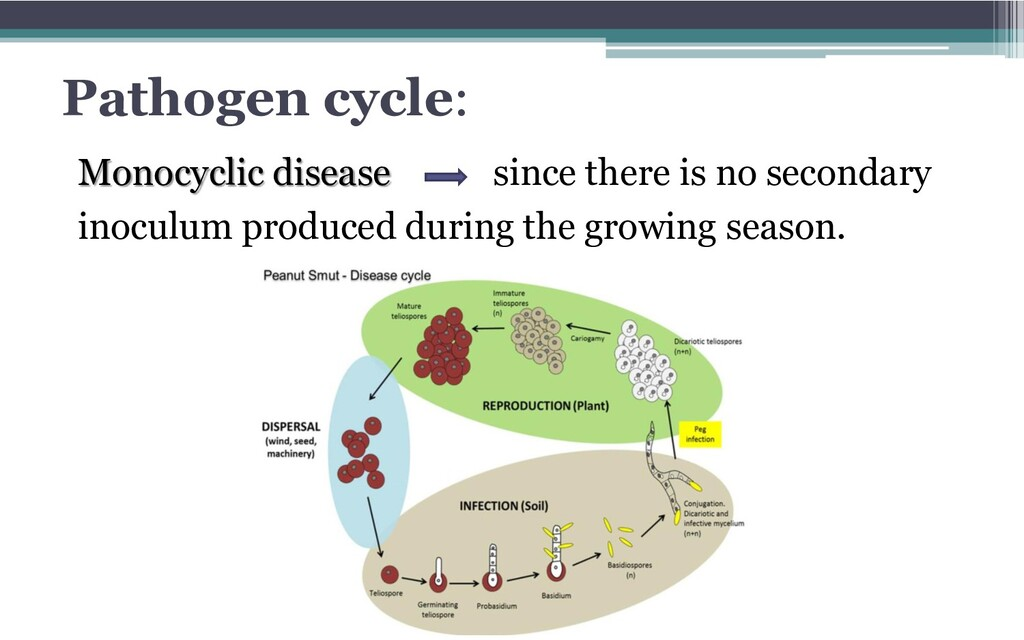Pathogen cycle: Monocyclic disease since there ...