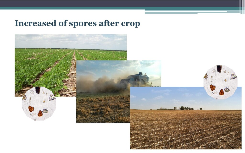 Increased of spores after crop