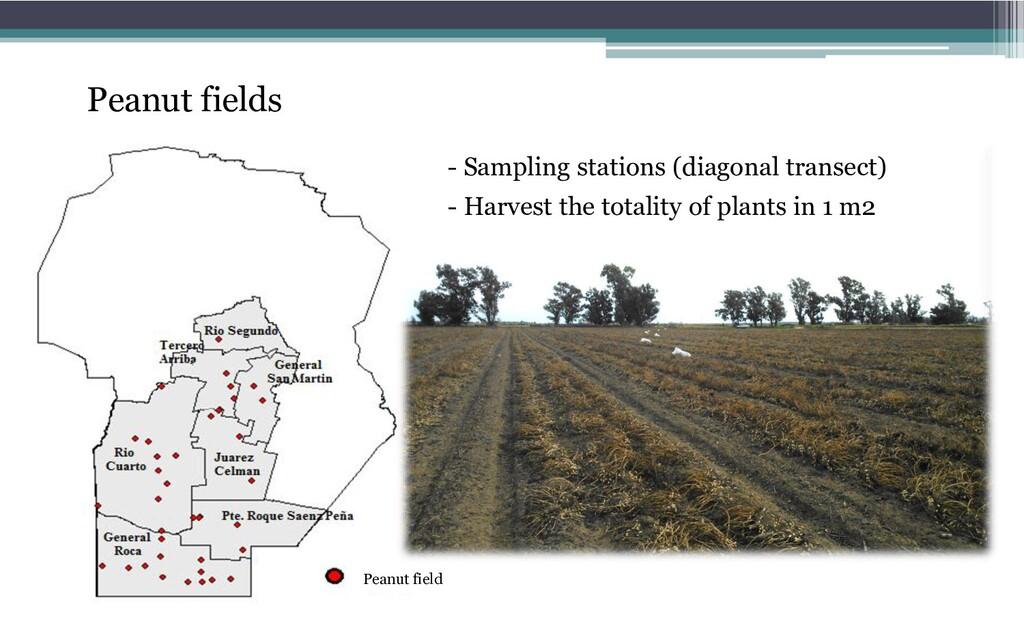 Peanut field - Sampling stations (diagonal tran...