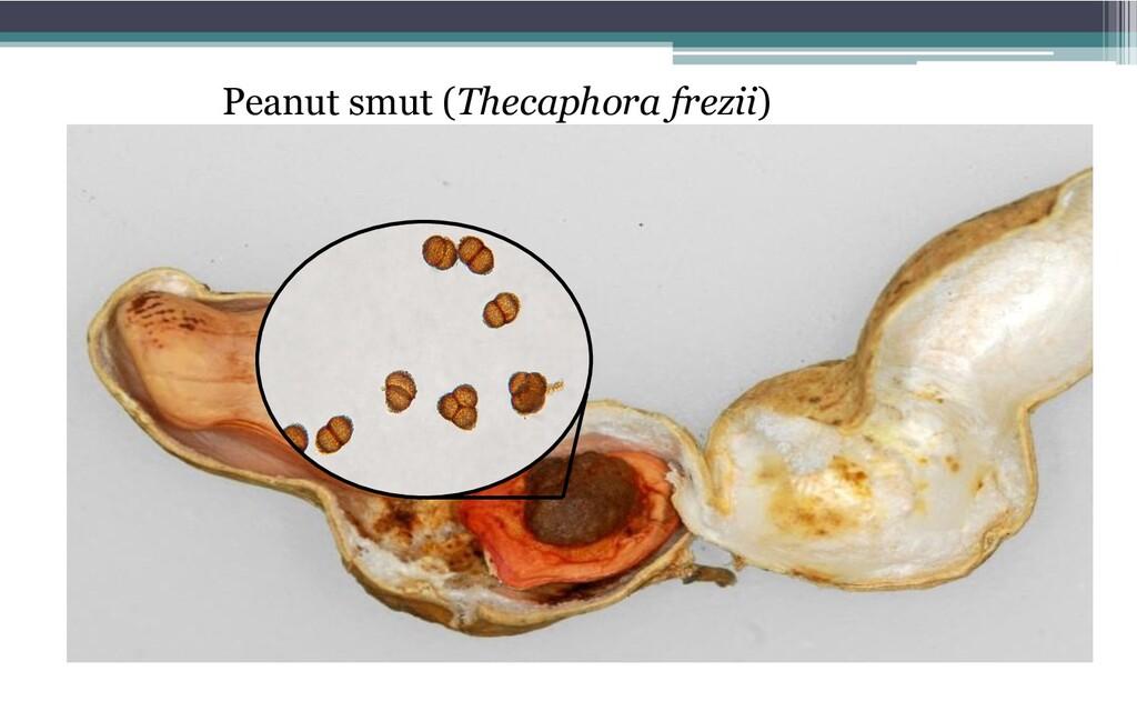 Peanut smut (Thecaphora frezii)