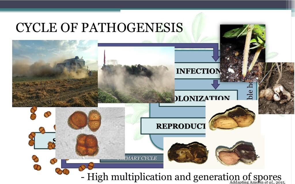 CYCLE OF PATHOGENESIS Addapting Amorin et al., ...