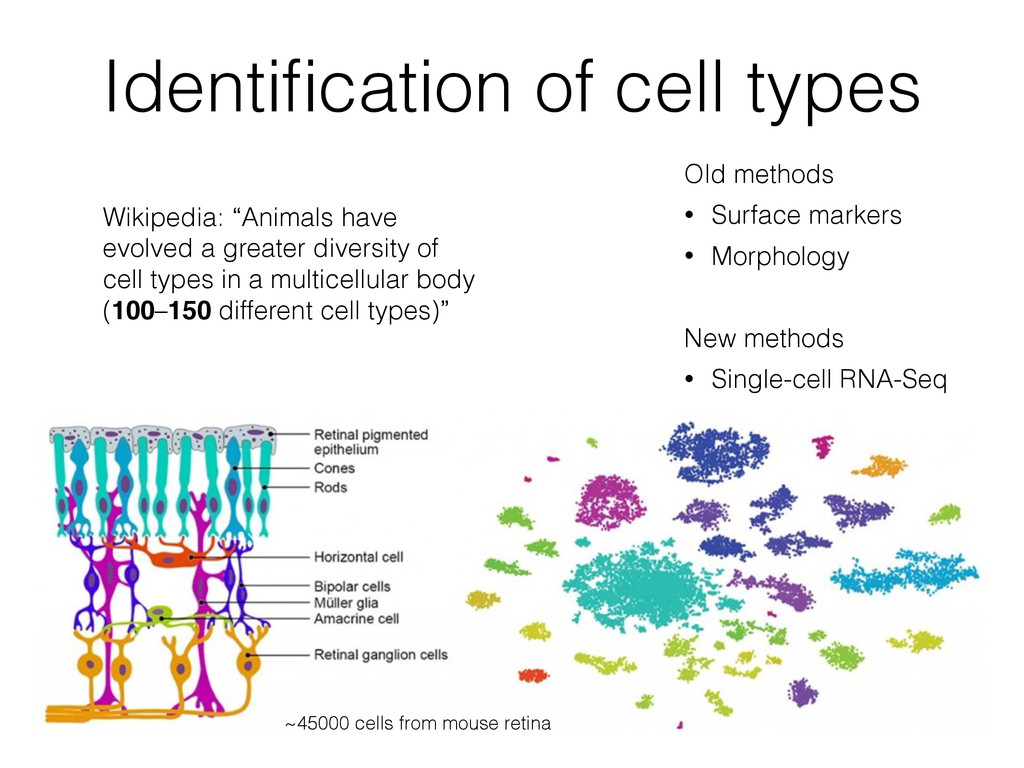 Identification of cell types ~45000 cells from m...
