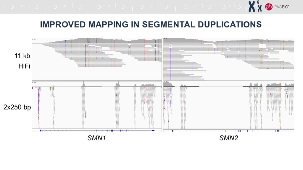 IMPROVED MAPPING IN SEGMENTAL DUPLICATIONS SMN1...