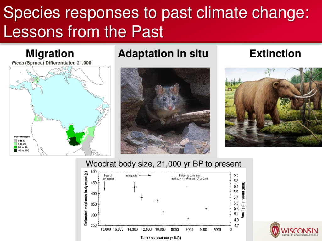 Species responses to past climate change: Lesso...