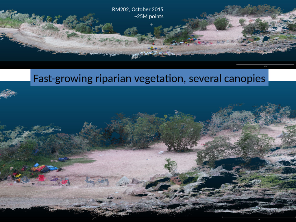 Fast-growing riparian vegetation, several canop...