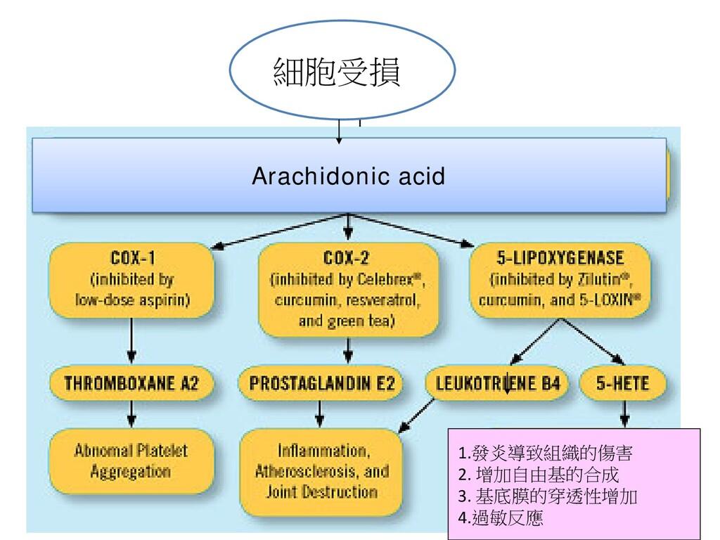 Arachidonic acid 1.發炎導致組織的傷害 2. 增加自由基的合成 3. 基底膜...