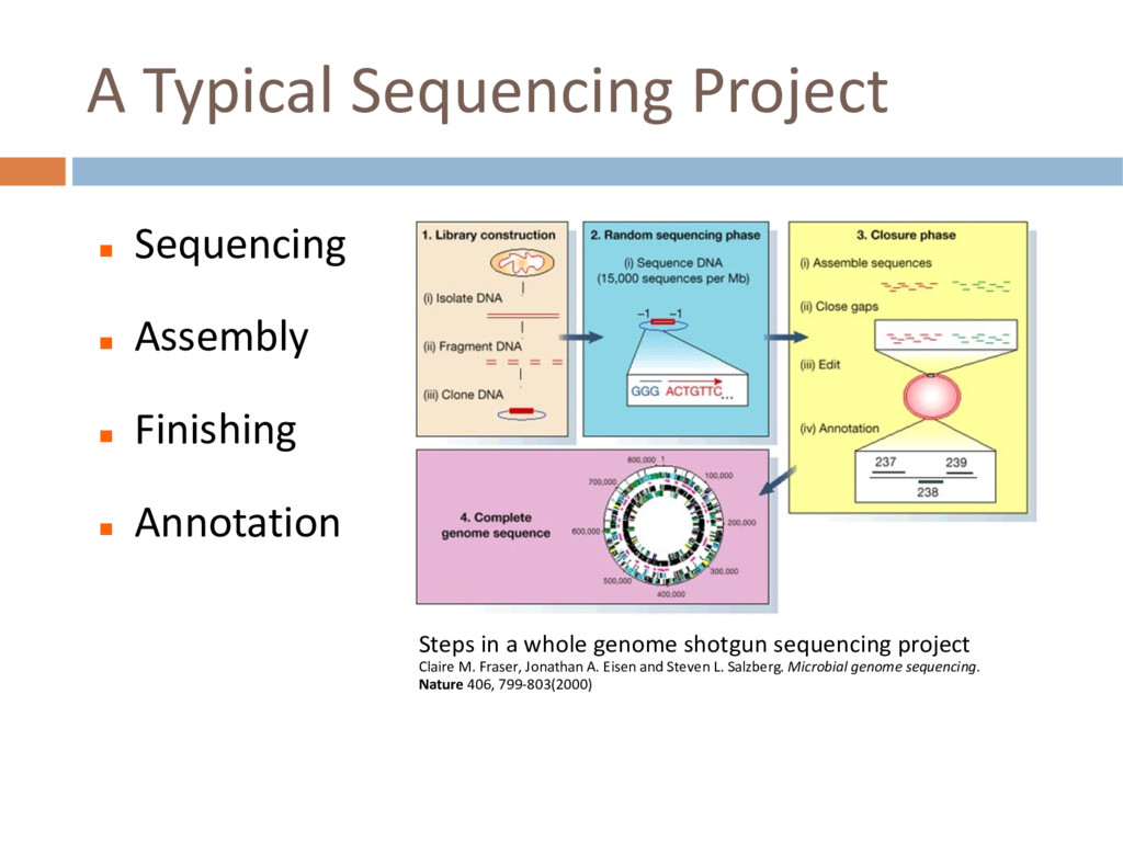A Typical Sequencing Project n Sequencing n Ass...