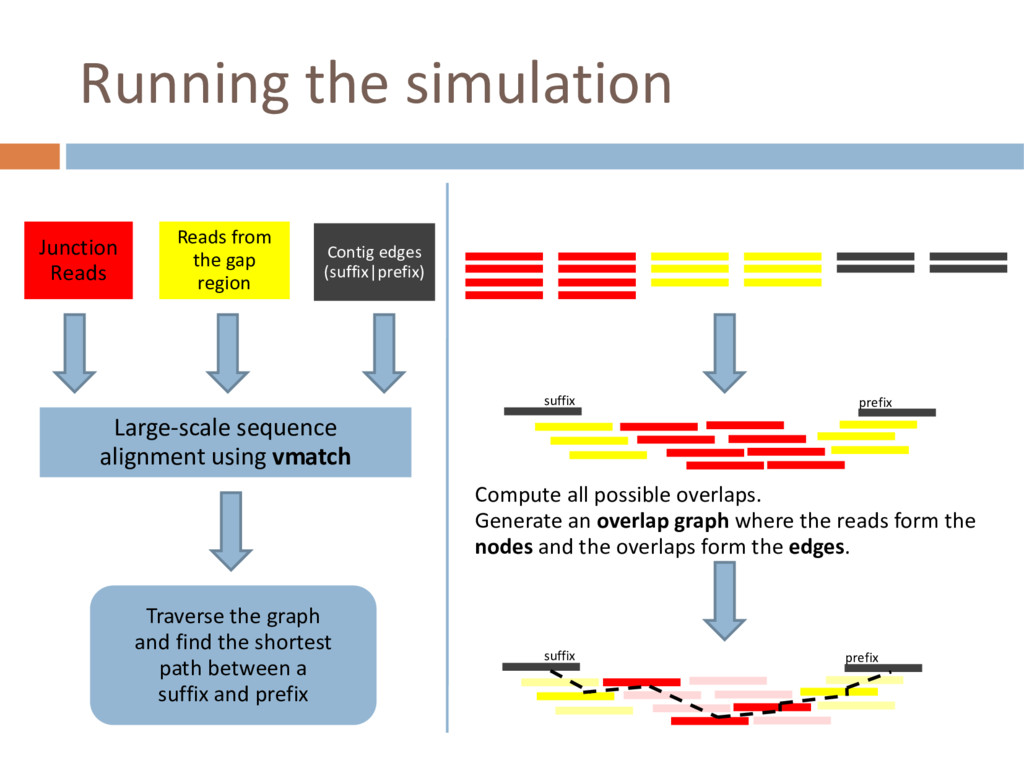 Running the simulation Junction Reads Reads fro...