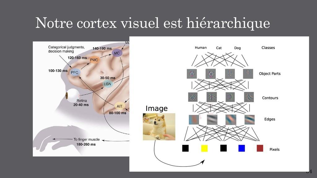 34 Notre cortex visuel est hiérarchique